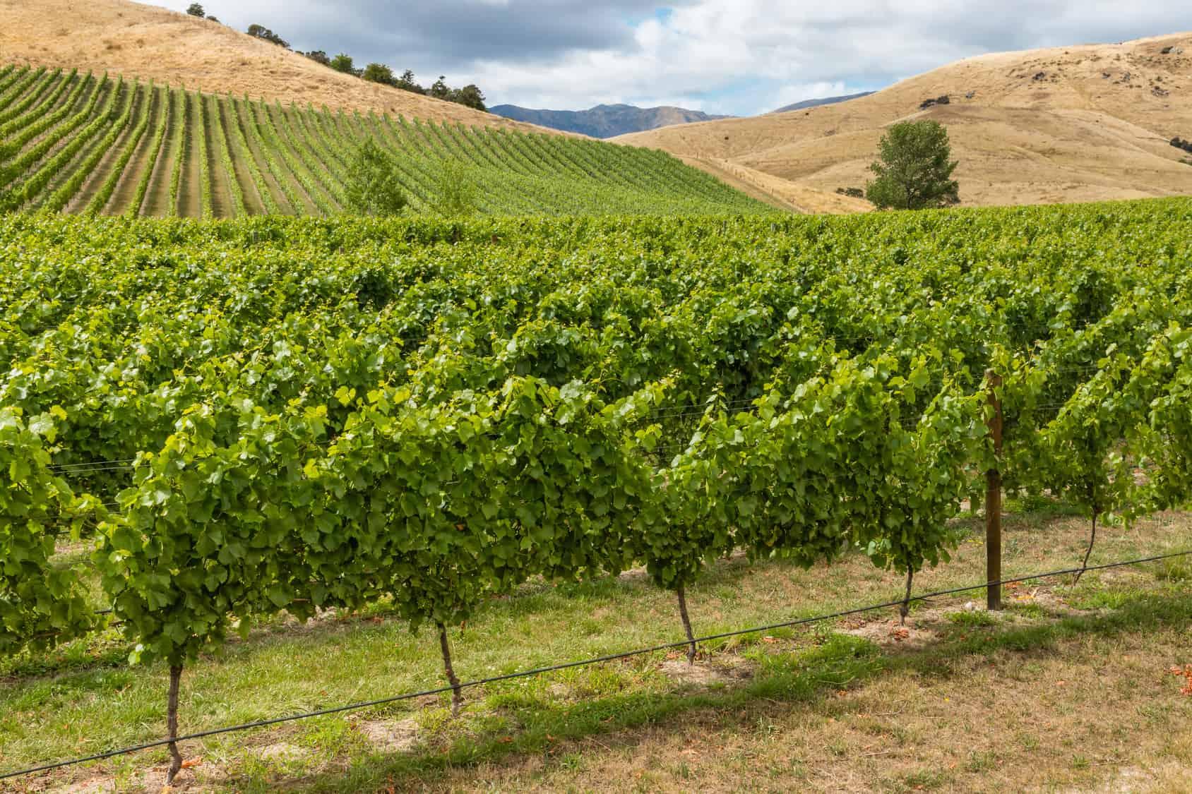 Das Weinland Australien
