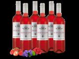 Probierpaket 6 Flaschen Viñaoliva Syrah Zorzalino Rosado6,66€ pro l