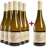 Weingut Keßler 2020 5+1 Paket Grauer Burgunder trocken BIO Weingut Keßler – Rheinhessen – bei WirWinzer
