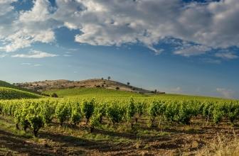 Das Weinland Italien – Das italienische Lebensgefühl