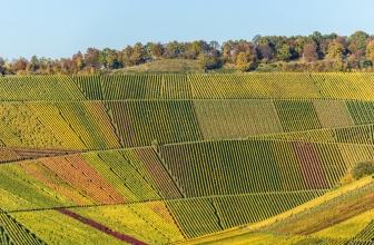 Temperamentvolle Weine trotz Trockenheit – Das Weinland Spanien