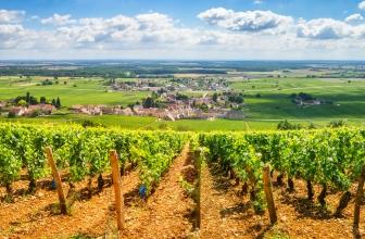 Das Weinland Frankreich