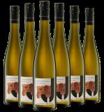 Julius 2019 Sauvignon Blanc Paket BIO Weingut Julius – Rheinhessen – bei WirWinzer